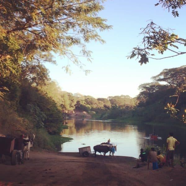 Ox Cart next to tempisque river