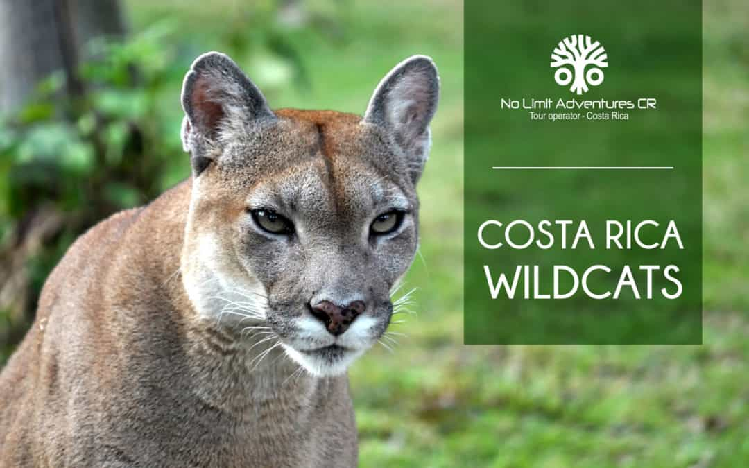 Costa Rica Wildcats