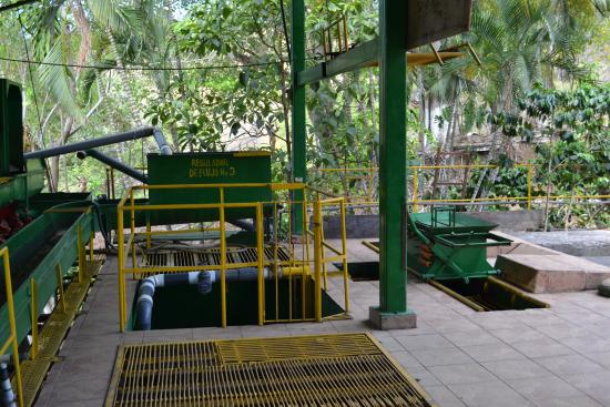 coffee cropping machines