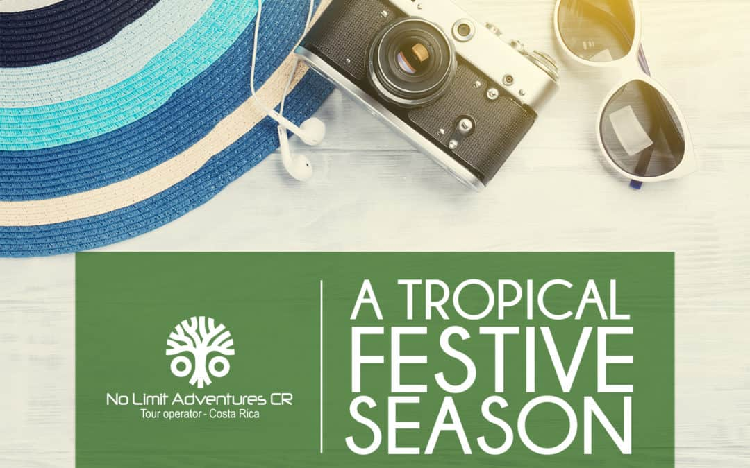 A Tropical Festive Season