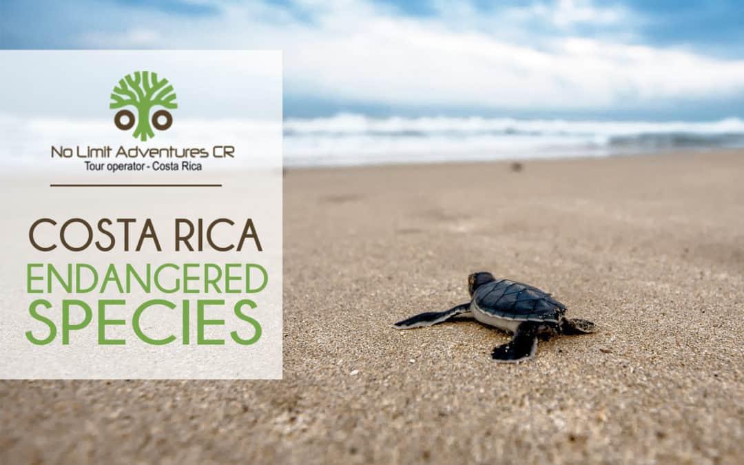 Costa Rica endangered species