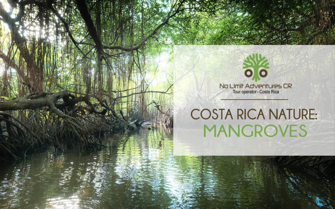 Costa Rica nature: mangroves